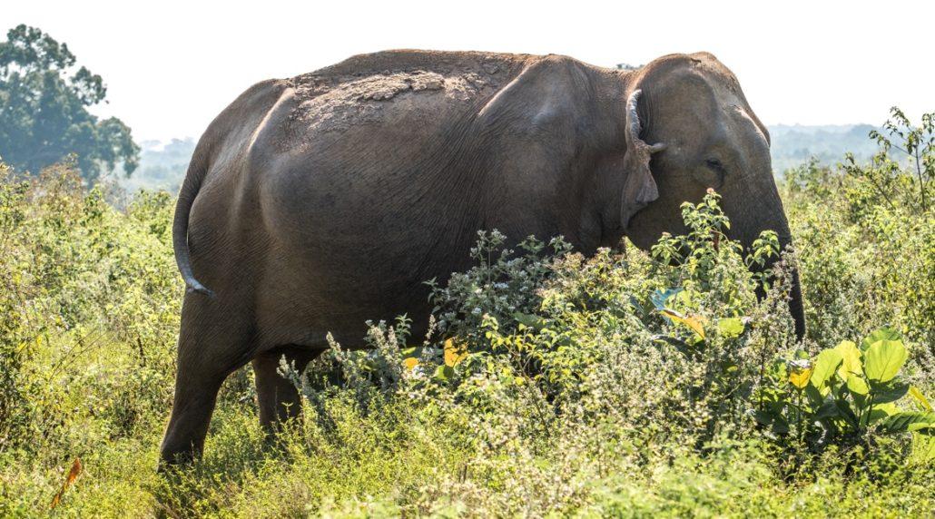 Sri Lanka Urlaub - Safari