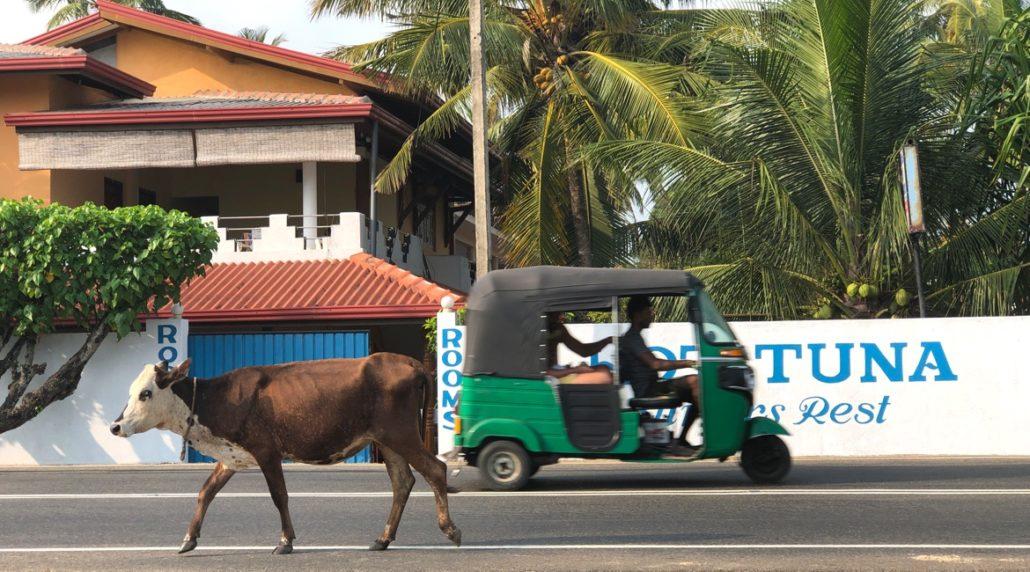 Sri Lanka Urlaub - Unterkunft